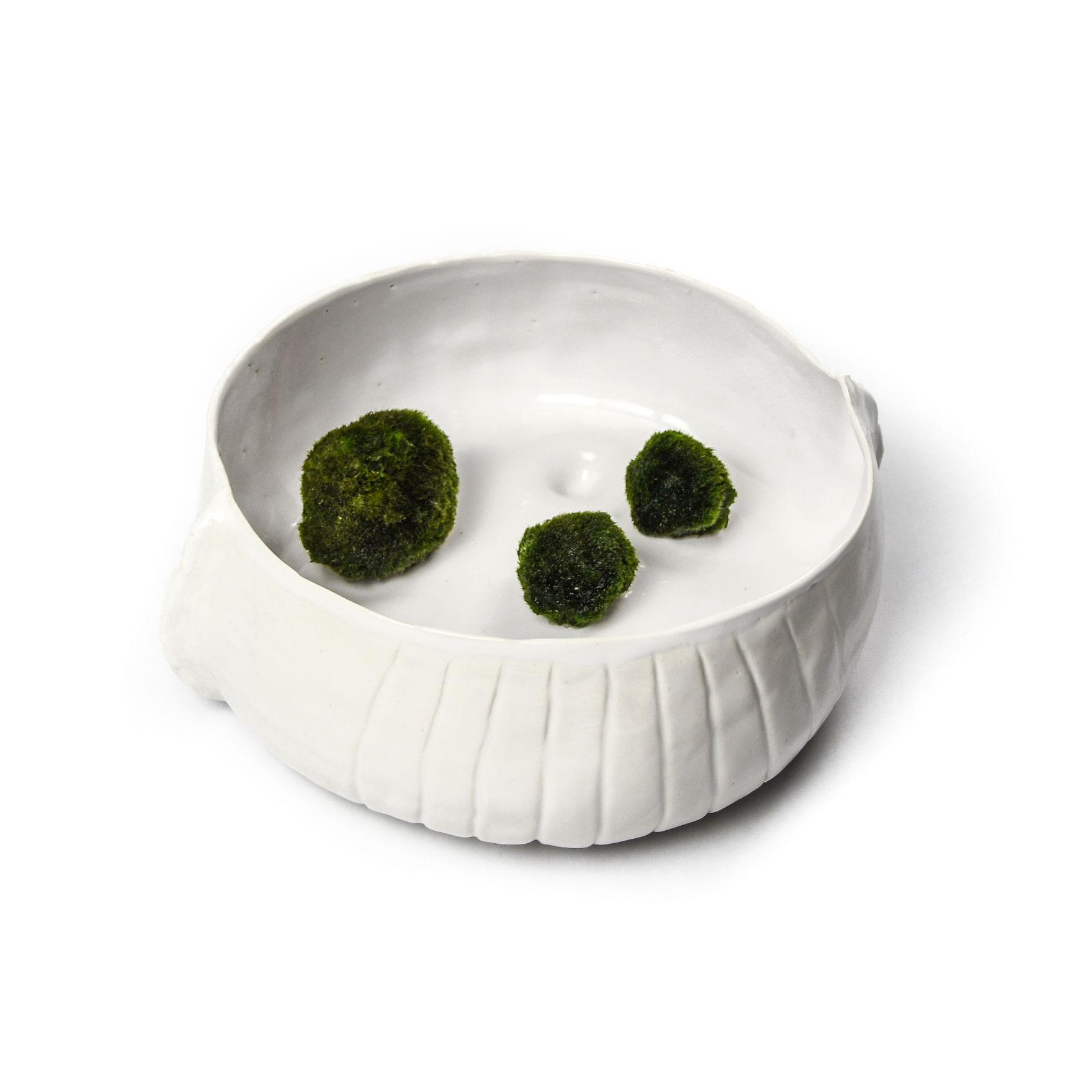 Living with Algae